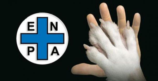 I cani randagi non verranno più soccorsi, il Comune di Catania sospende il servizio