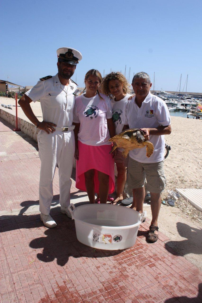 Giovane esemplare di tartaruga marina Caretta caretta liberata a San Vito lo Capo