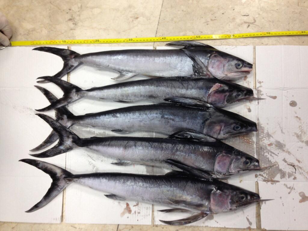 Guardia Costiera di Catania contro la pesca di frodo