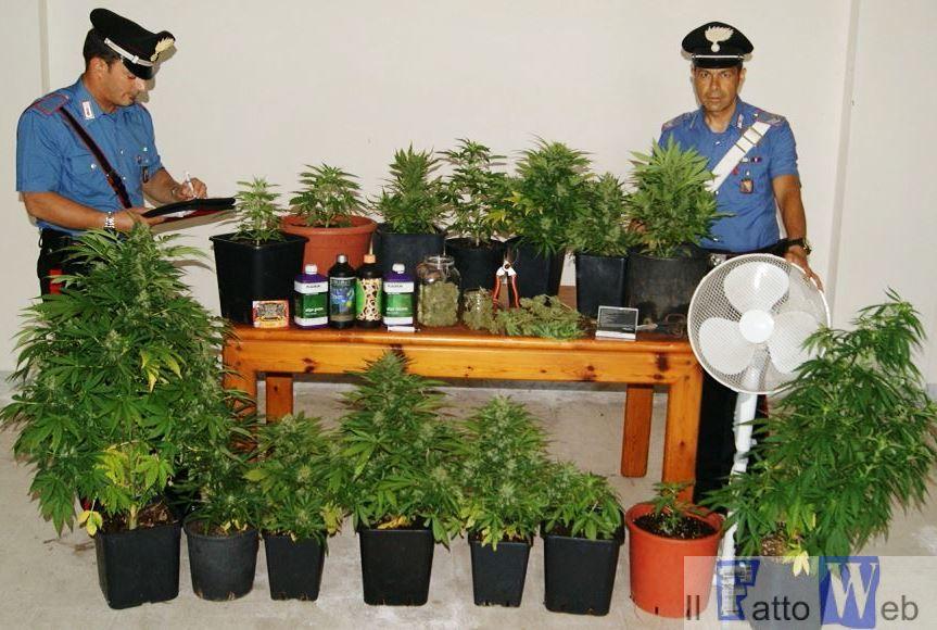 """Acireale Fidanzati si dedicano alla coltivazione di """"marijuana"""". Arrestati"""