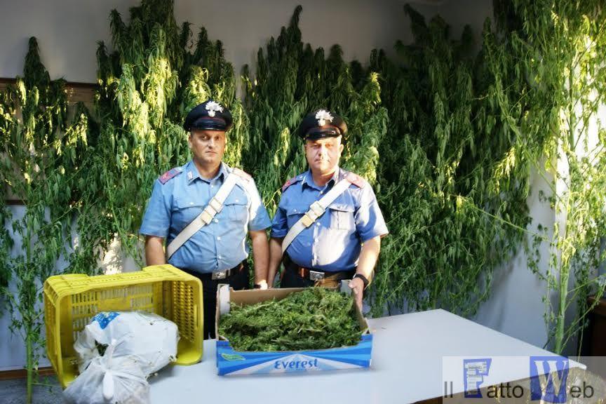 Coltivavano marijuana nel giardino di casa. Arrestata una coppia
