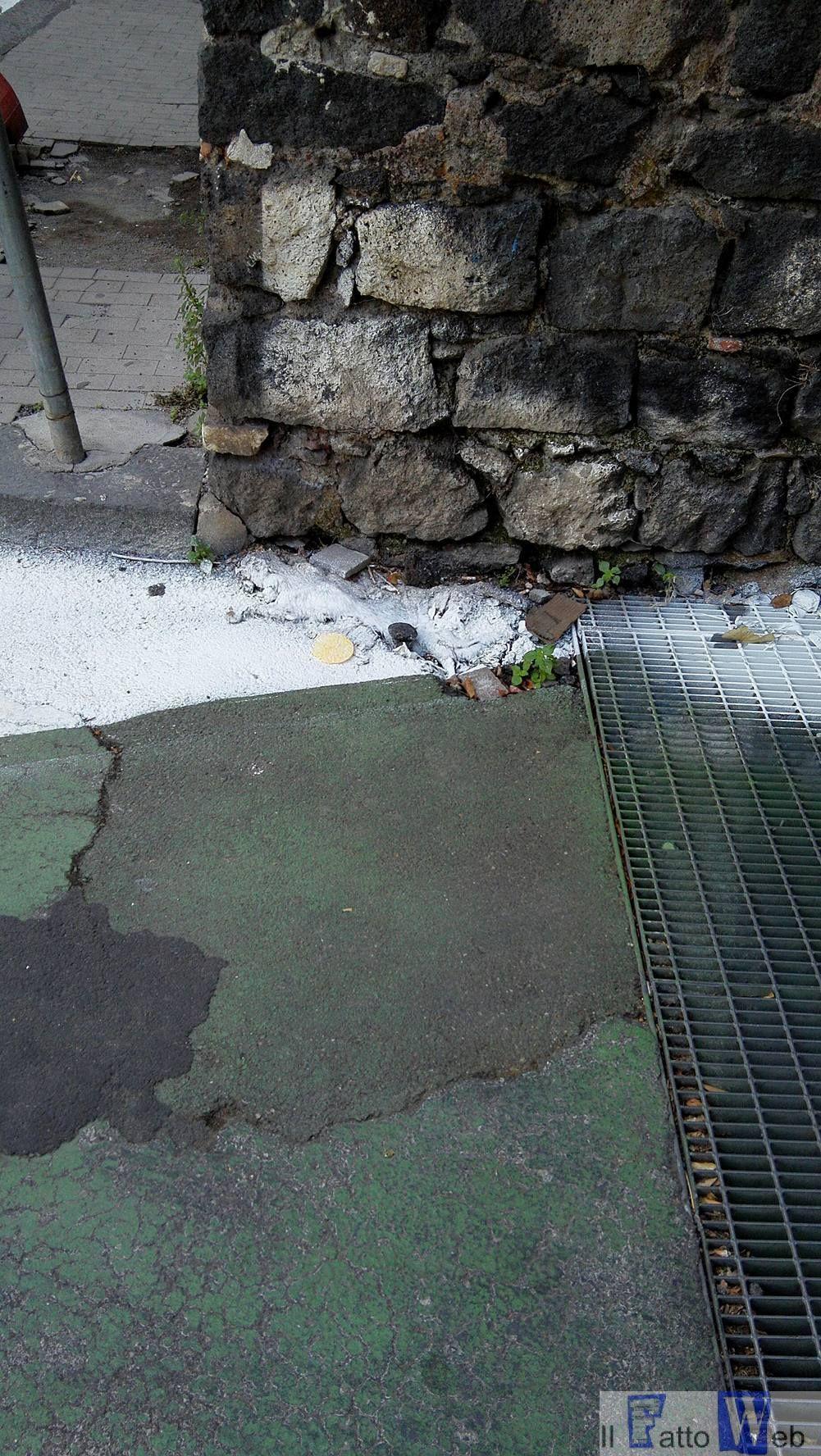 """Il gatto """"seppellito"""" dalle strisce: un'immagine poco edificante"""