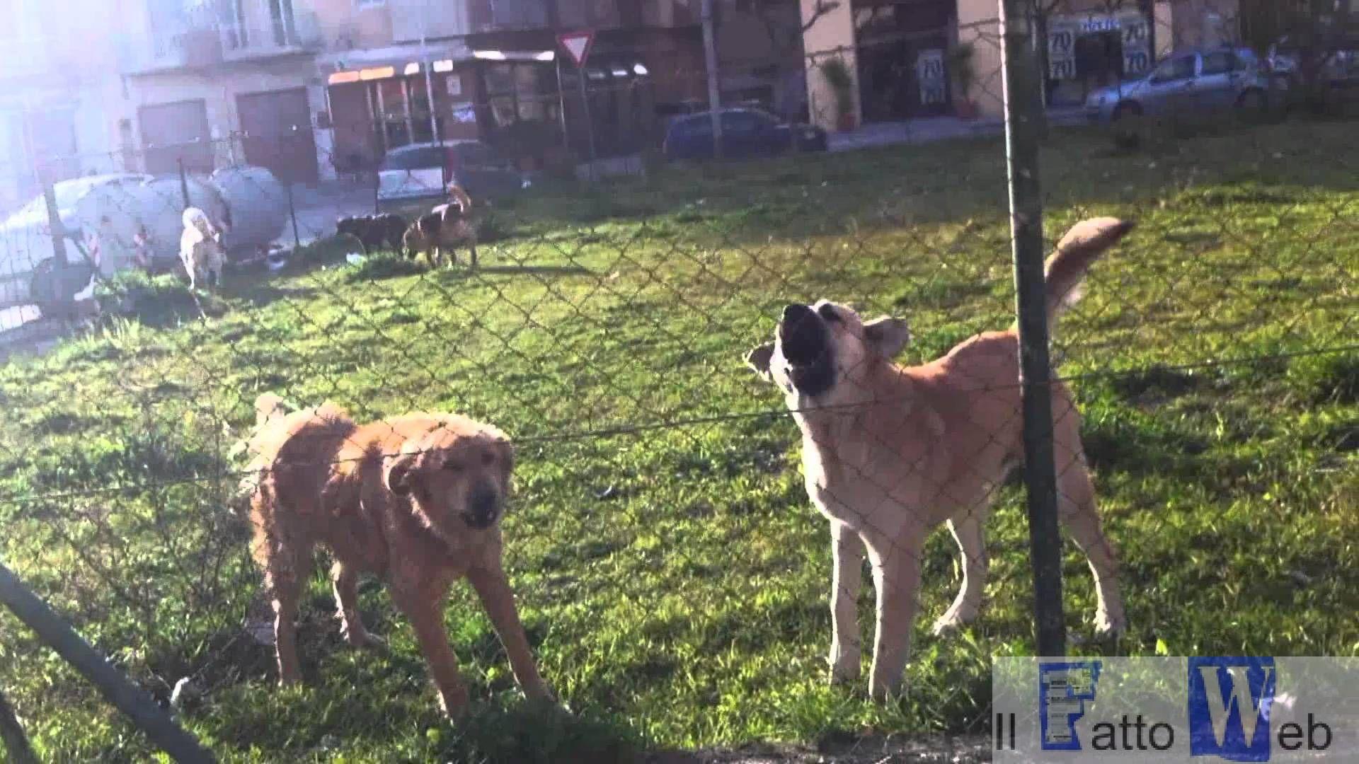 Aggredito anziano da cani randagi a San Nullo (Ct)
