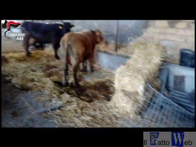 Controlli alla filiera alimentare delle carni: Nas Catania sequestrano macello abusivo