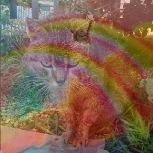 """Strage nella colonia felina a San Giovanni la Punta, Partito Animalista Italiano: """"situazione insostenibile"""""""