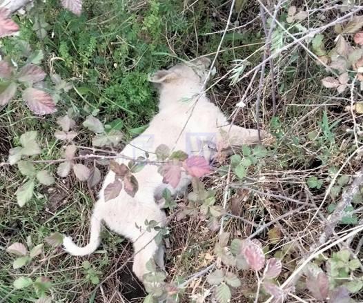 Cani avvelenati ad Adrano. Partito Animalista Italiano: ‹‹Siamo veramente indignati e ci lascia a dir poco sgomenti››